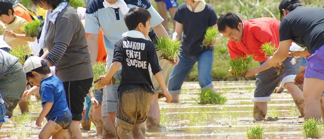 米作り体験